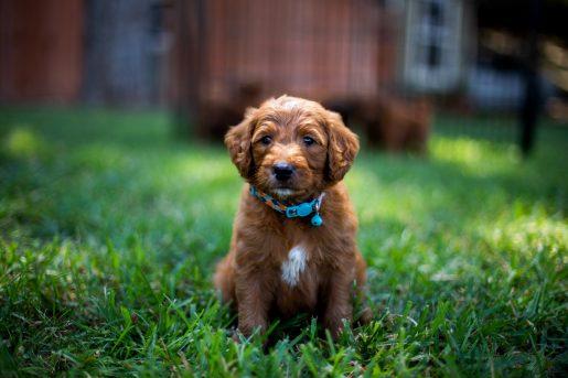 puppy-programs